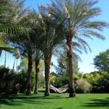 parker-palm-springs